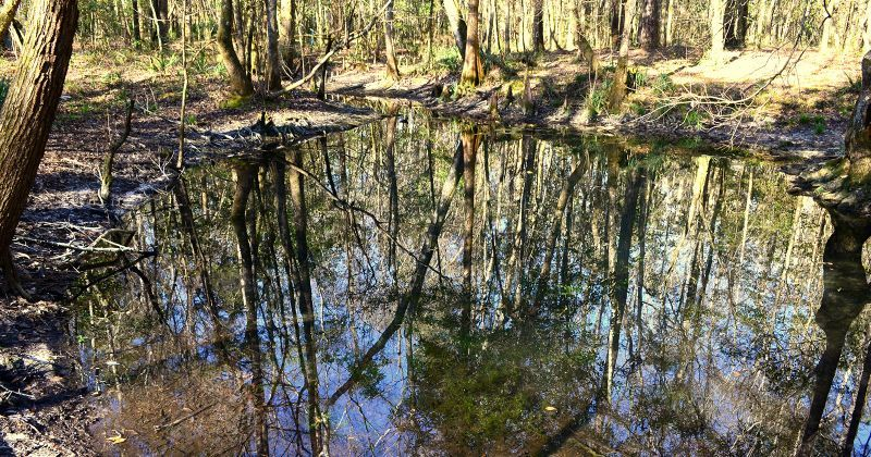 Wakulla State Forest accessible nature drive and view of spring