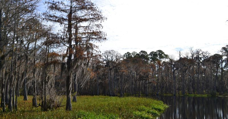 Otter Lake and cypress trees at Otter Lake Recreational Area