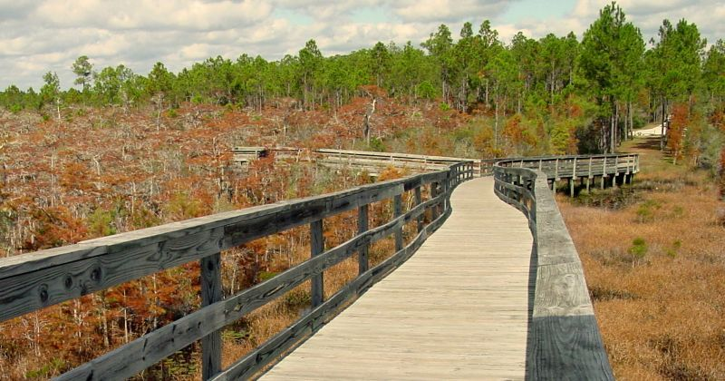 Boardwalk over ancient cypress trees at Dwarf Cypress Boardwalk