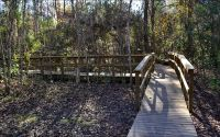 Interpretive boardwalk to limestone sinkhole at Wakulla Springs State Park