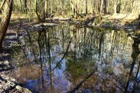 Wakulla State Forest view of natural spring