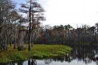 Otter Lake and the cypress trees at Otter Lake Recreational Area