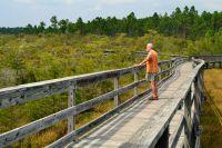 Dwarf Cypress Boardwalk - a different view every season