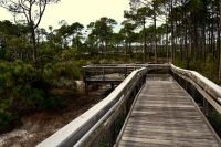 - Dr. Julian G. Bruce St. George Island State Park - trail boardwalk